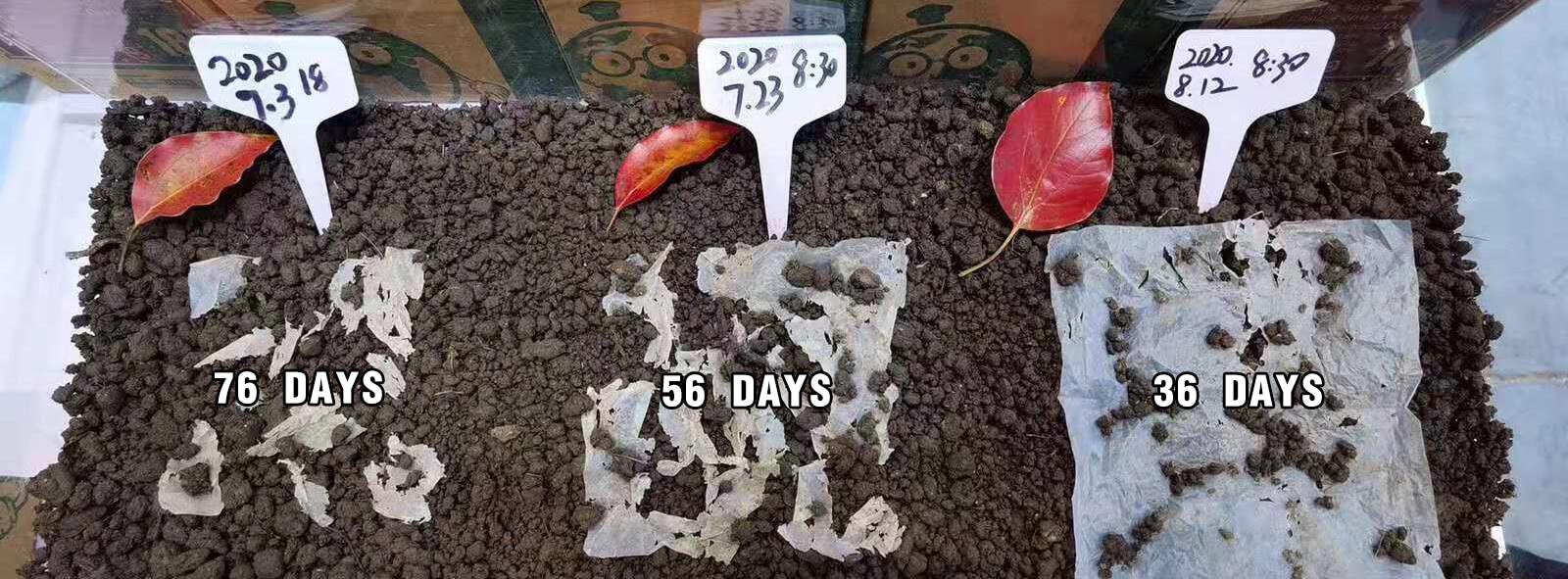 biodegradable days 5