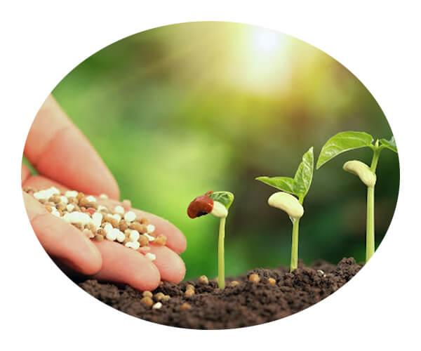 fertilizer industry 2