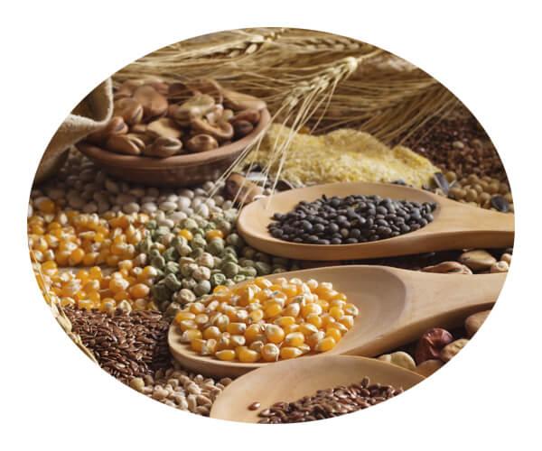 grain industry 4
